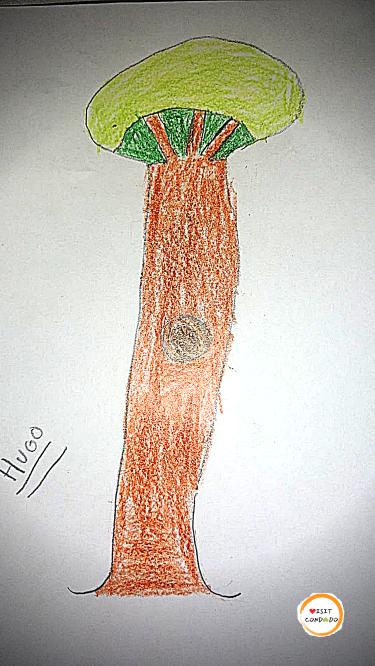 dibujo condado durante corona virus