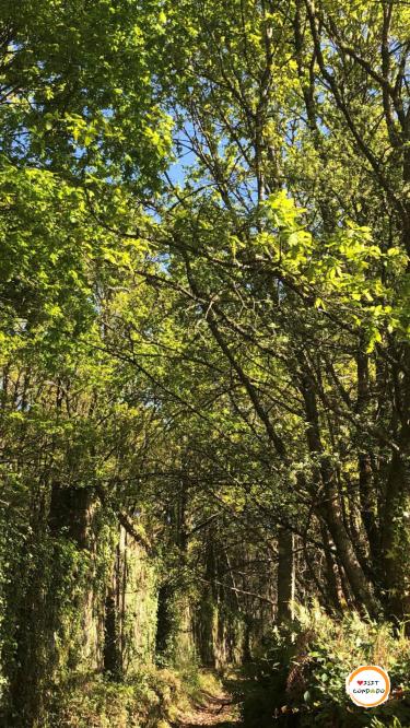 Senderismo Naturaleza Condado Rías Baixas Galicia